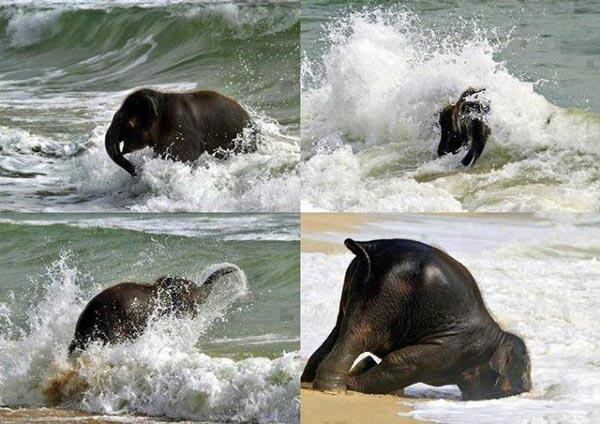 perierga.gr - Όταν το ελεφαντάκι είδε για πρώτη φορά τη θάλασσα!