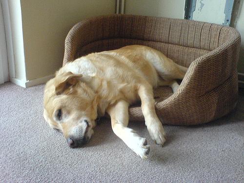 perierga.gr - Απίθανα σκυλιά επιχειρηματολογούν υπέρ της ξάπλας!