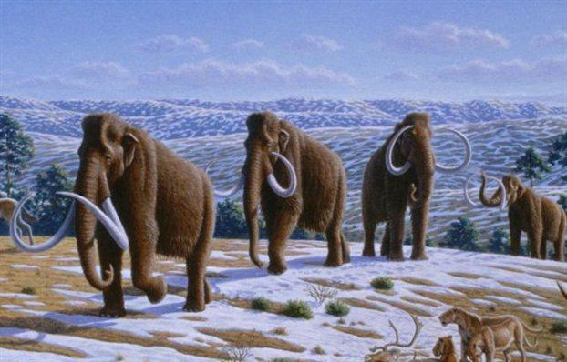 Perierga.gr - Πλησιάζει η ανάσταση των μαμούθ;
