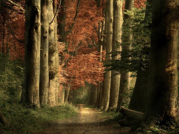 perierga.gr - Εκπληκτικά μονοπάτια στη φύση!