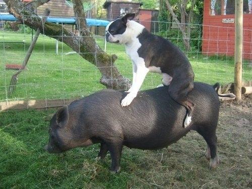 perierga.gr - Απίθανα ζώα-αναβάτες...σε άλλα ζώα!