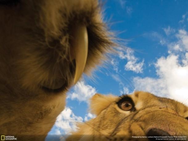 perierga.gr - Οι καλύτερες φωτογραφίες ζώων από το National Geographic!