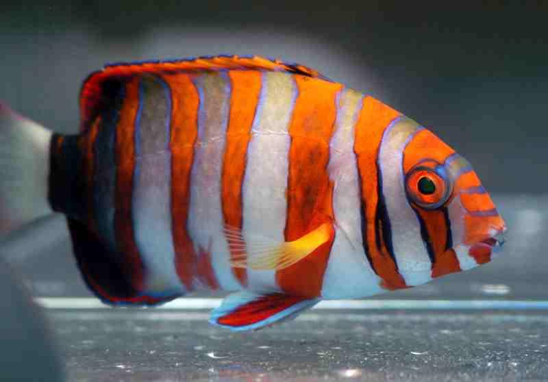 perierga.gr - Εκπληκτικά ψάρια που ζουν στους κοραλλιογενείς υφάλους!