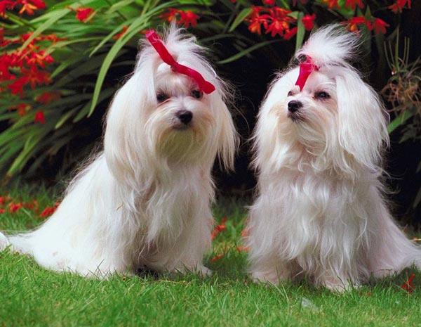 perierga.gr - Ο κόσμος των σκύλων είναι πολύ πιο χρωματιστός από όσο νομίζουμε