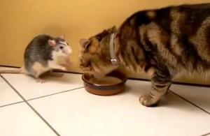 perierga.gr - Γάτα και ποντίκι (δεν) μοιράζονται το γάλα τους!