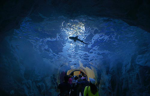 perierga.gr - Aqua Planet Yesou: Ένα εντυπωσιακό ενυδρείο!