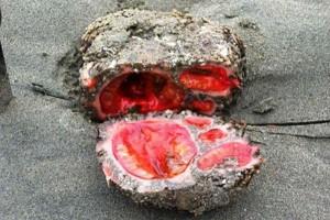 "perierga.gr - Ο ""ζωντανός"" βράχος!"