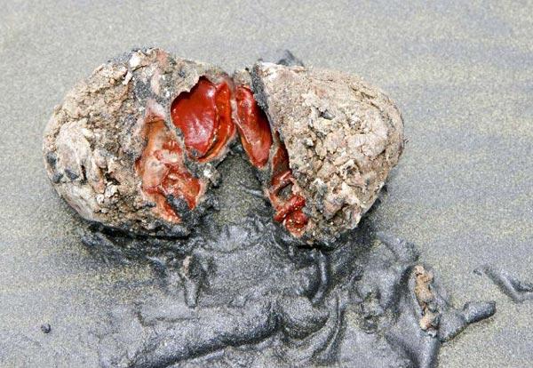Ένας παράξενος «ζωντανός» βράχος!
