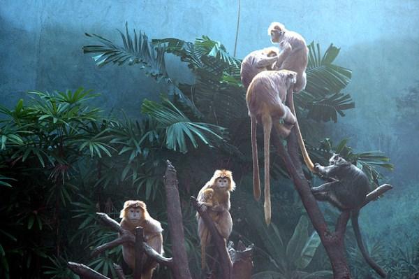 Οι μεγαλύτεροι ζωολογικοί κήποι στον κόσμο!