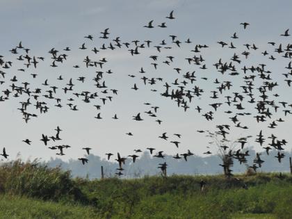 Perierga.gr - Τα πουλιά γνωρίζουν τα όρια ταχύτητας