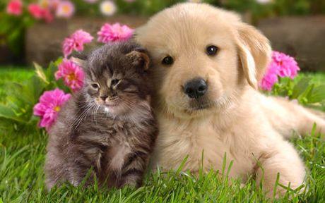 Perierga.gr - Γάτα σώθηκε ύστερα από μετάγγιση αίματος σκύλου!