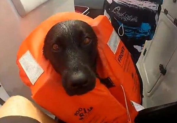 perierga.gr - Σκύλος κολυμπάει με δελφίνια! (βίντεο)