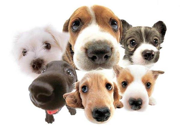 perierga.gr - Γιατί οι άνθρωποι θλίβονται πιο πολύ για τα ζώα από τους άλλους;