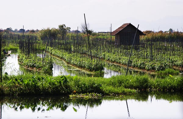 perierga.gr - Απίθανοι πλωτοί κήποι λαχανικών!