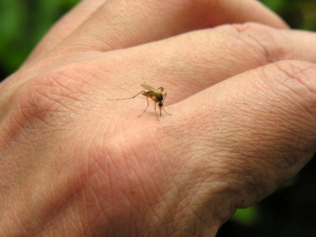perierga.gr - Δείτε τι συμβαίνει όταν μας τσιμπάει ένα κουνούπι!