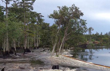 Perierga.gr - Η γη κυριολεκτικά καταπίνει γιγάντια δέντρα!