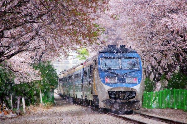 perierga.gr - Απίθανοι σιδηρόδρομοι στον κόσμο!