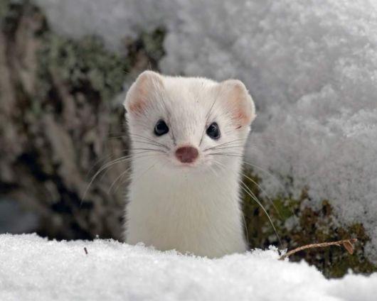 Perierga.gr - Υπέροχα ζώα σε χρώμα λευκό!