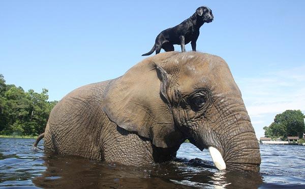 perierga.gr - Τρυφερό βίντεο παρουσιάζει τη σπάνια φιλία σκύλου & ελέφαντα!