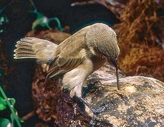 perierga.gr - Εκπληκτικά πράγματα που μπορούν να κάνουν τα πτηνά!