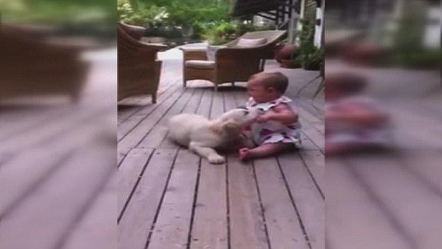 perierga.gr - H στιγμή που ένα αξιολάτρευτο κουτάβι συνάντησε ένα μωρό! (βίντεο)