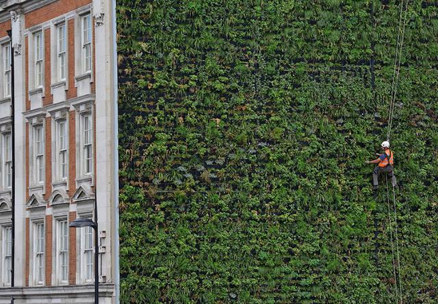 perierga.gr - Ο μεγαλύτερος κάθετος κήπος σε ιστορικό κτήριο!