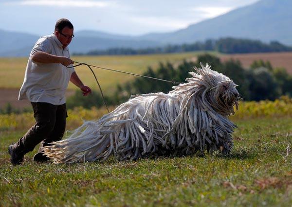 perierga.gr - Σκυλιά σαν... σφουγγαρίστρες!