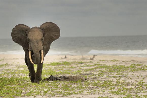 perierga.gr - Άγρια ζώα απολαμβάνουν βουτιές σε παραλία!