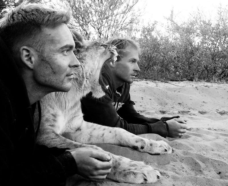 "perierga.gr - ""Η συνάντησή μου με τα λιοντάρια""..."