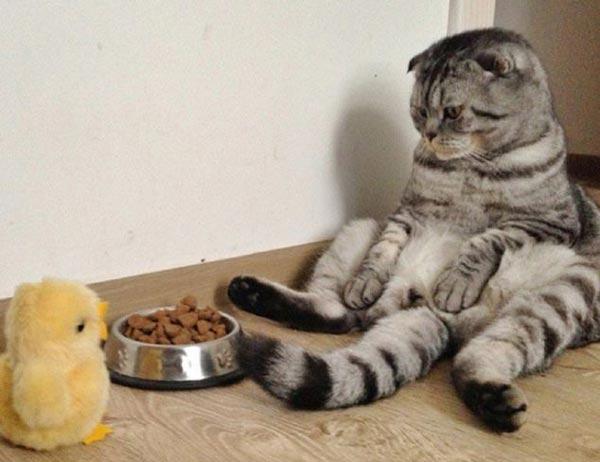 perierga.gr - Η γάτα που ποζάρει σαν άνθρωπος σαρώνει το Διαδίκτυο!