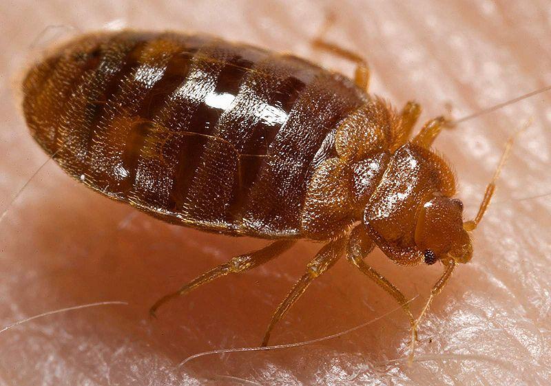 perierga.gr - 7 πολύ μικρά θανατηφόρα πλάσματα!