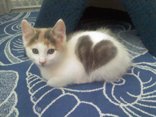 perierga.gr - Γάτες που έγιναν διάσημες από το τρίχωμά τους!