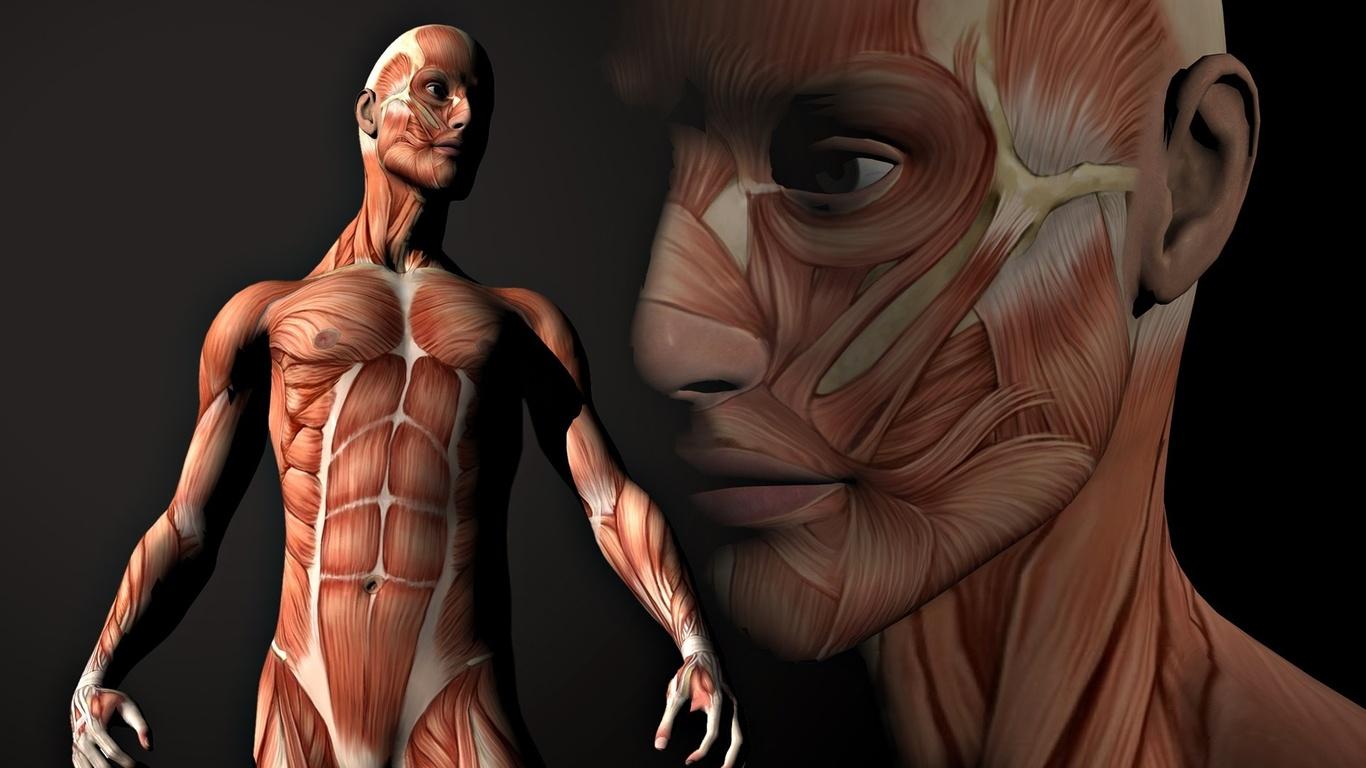 perierga.gr - 30+1 περίεργες πληροφορίες για το ανθρώπινο σώμα!