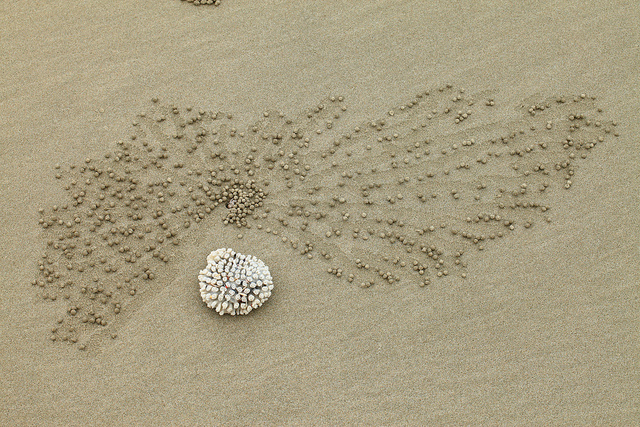 perierga.gr - Τα καβούρια… σχεδιάζουν στην άμμο!