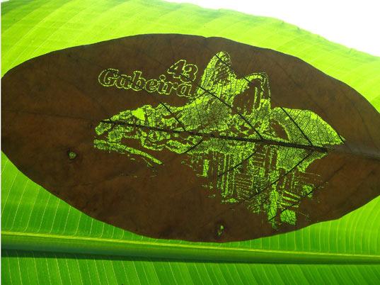 perierga.gr - Κάρτες φτιαγμένες πάνω σε φύλλα δέντρων!