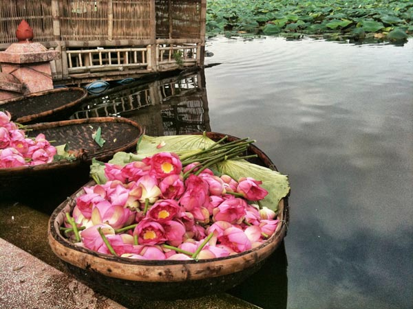 perierga.gr - Lotus lake: Η εκπληκτική «λίμνη των λωτών»