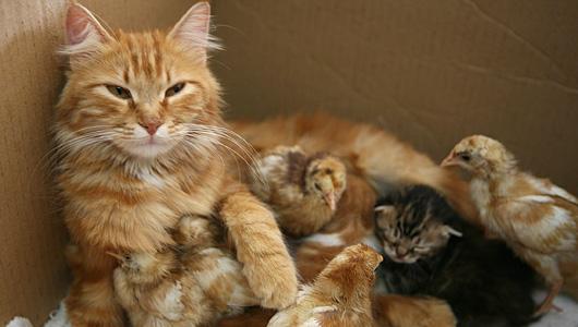 perierga.gr - Μια μεγάλη αγαπημένη οικογένεια…