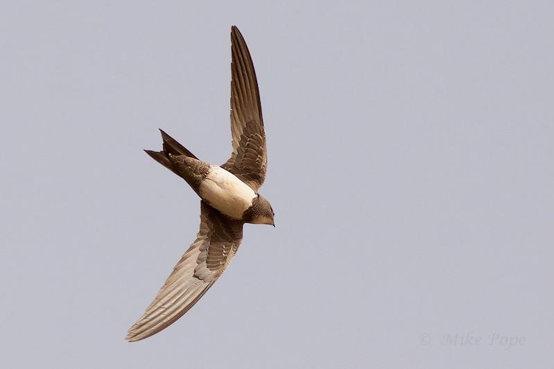 perierga.gr - Πουλί που προσγειώνεται κάθε έξι μήνες!