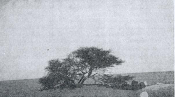 Perierga.gr - Η θλιβερή ιστορία του πιο μοναχικού δέντρου