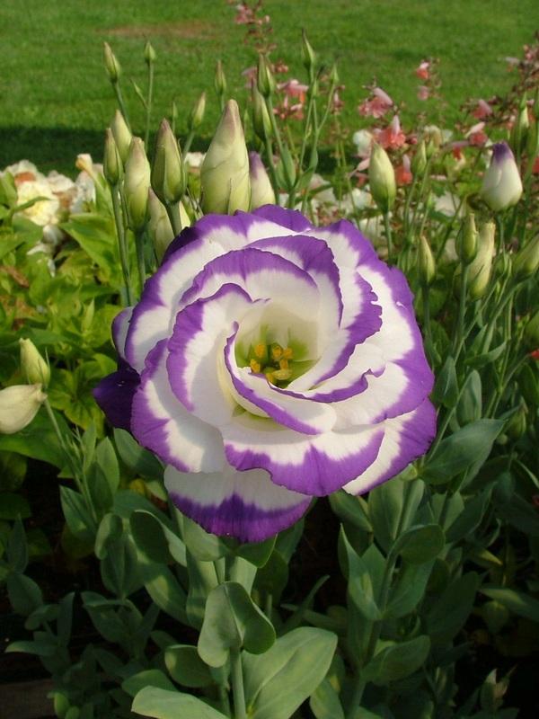 perierga.gr - Τα 10 πιο ακριβά λουλούδια στον κόσμο!