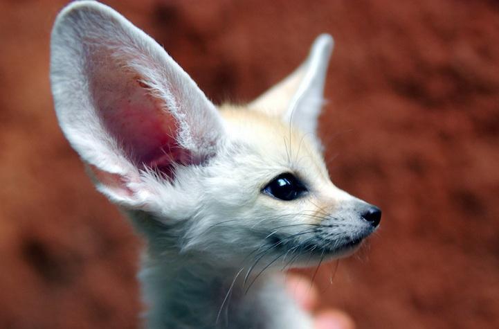 perierga.gr - Tο πιο αξιολάτρευτο ζώο στον κόσμο!