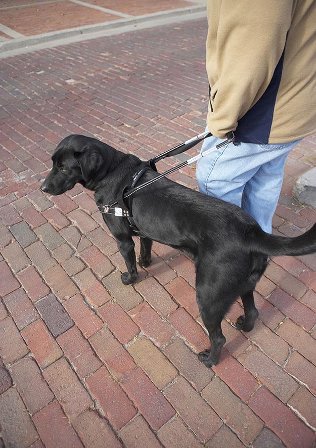 perierga.gr - 10 σκύλοι-οδηγοί που θα σας συγκινήσουν!