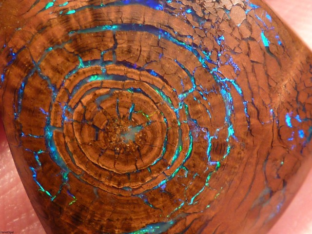 perierga.gr - Σπάνιο οπάλιο μιμείται τους αυξητικούς δακτυλίους ενός δέντρου!
