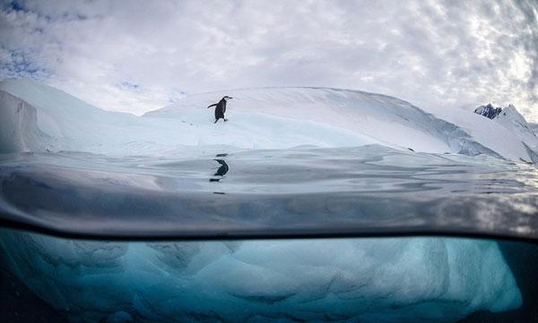 perierga.gr - Παιχνιδιάρικοι πιγκουίνοι κάνουν βουτιές από παγόβουνο!