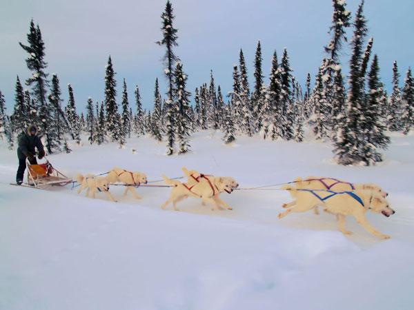 perierga.gr - Εναλλακτική μετακίνηση στο χιόνι με έλκηθρα!