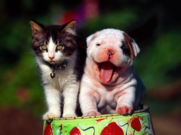 perierga.gr - Τα σκυλιά «τρέμουν» τις γάτες! (βίντεο)