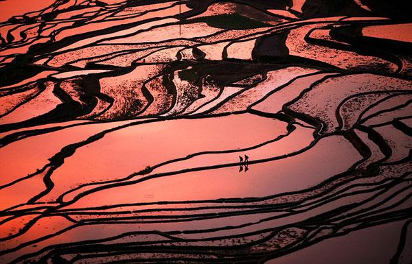 perierga.gr - Φωτογραφίζοντας τις εκπληκτικές καλλιέργειες της Κίνας!