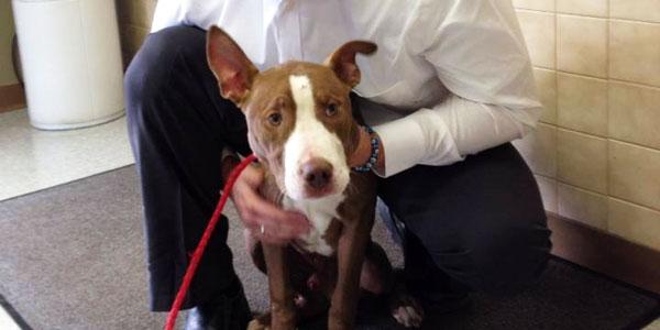 perierga.gr - Σκύλος επέζησε θαμμένος μία εβδομάδα κάτω από μπάζα!