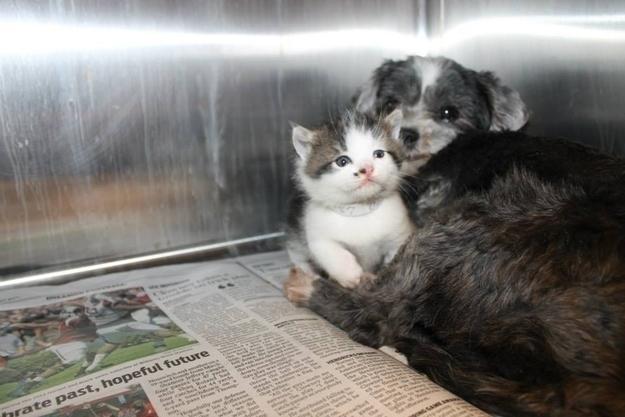 "perierga. gr - Αδέσποτο σκυλάκι γίνεται ""φύλακας άγγελος"" για ένα γατάκι!"
