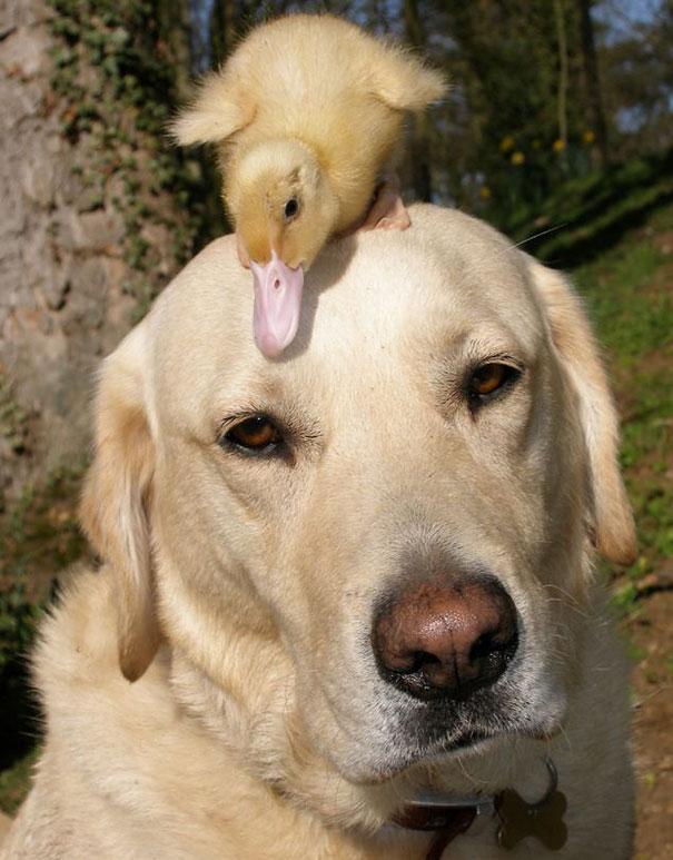 perierga.gr - Ασυνήθιστες φιλίες ζώων που θα σας συγκινήσουν!